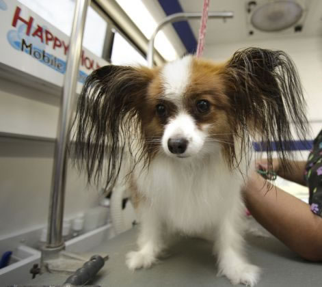 Stress-less Dog Grooming