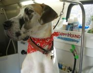 hgal Happy-Hound-photos-194 600w